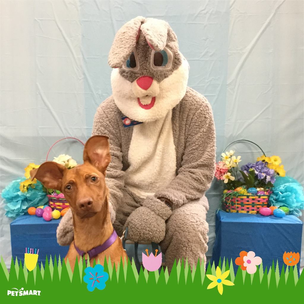Visiting with the Easter Bunny